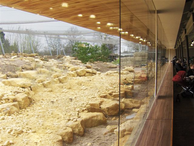 Frameless glass walls to zoo cafe